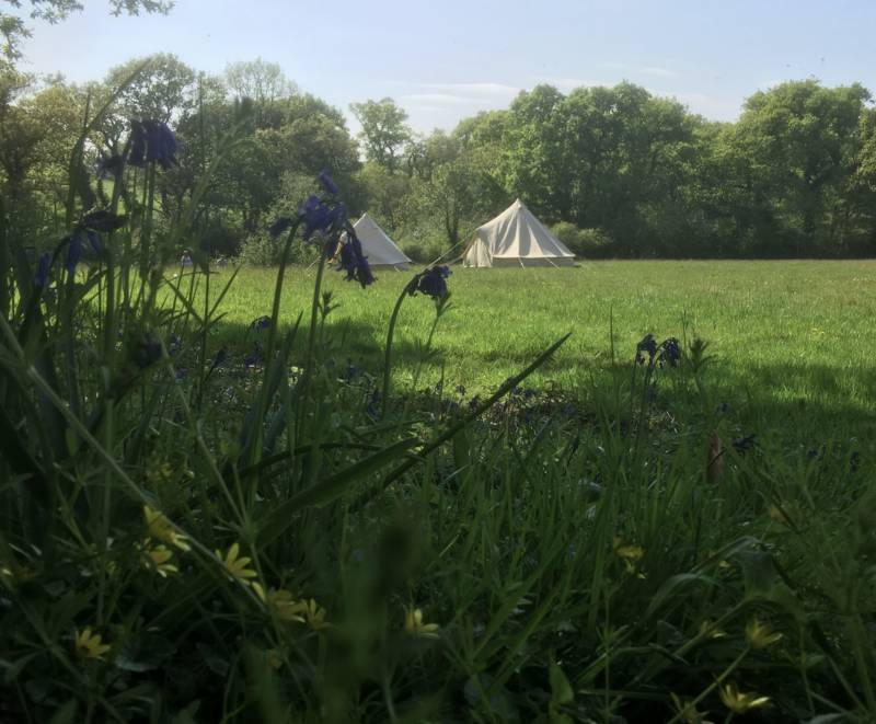 Tent Pitch (Old Hay Meadow)