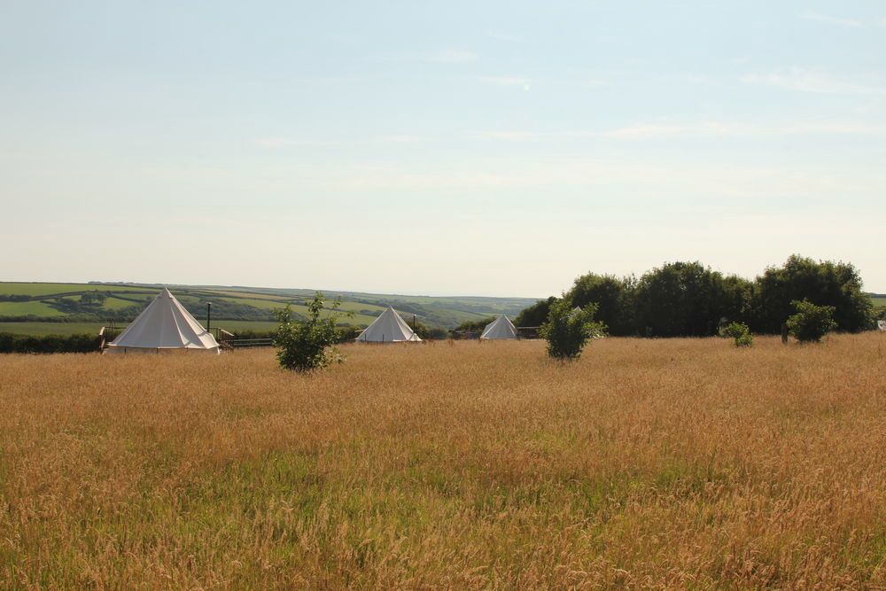 Bell Tents in Devon