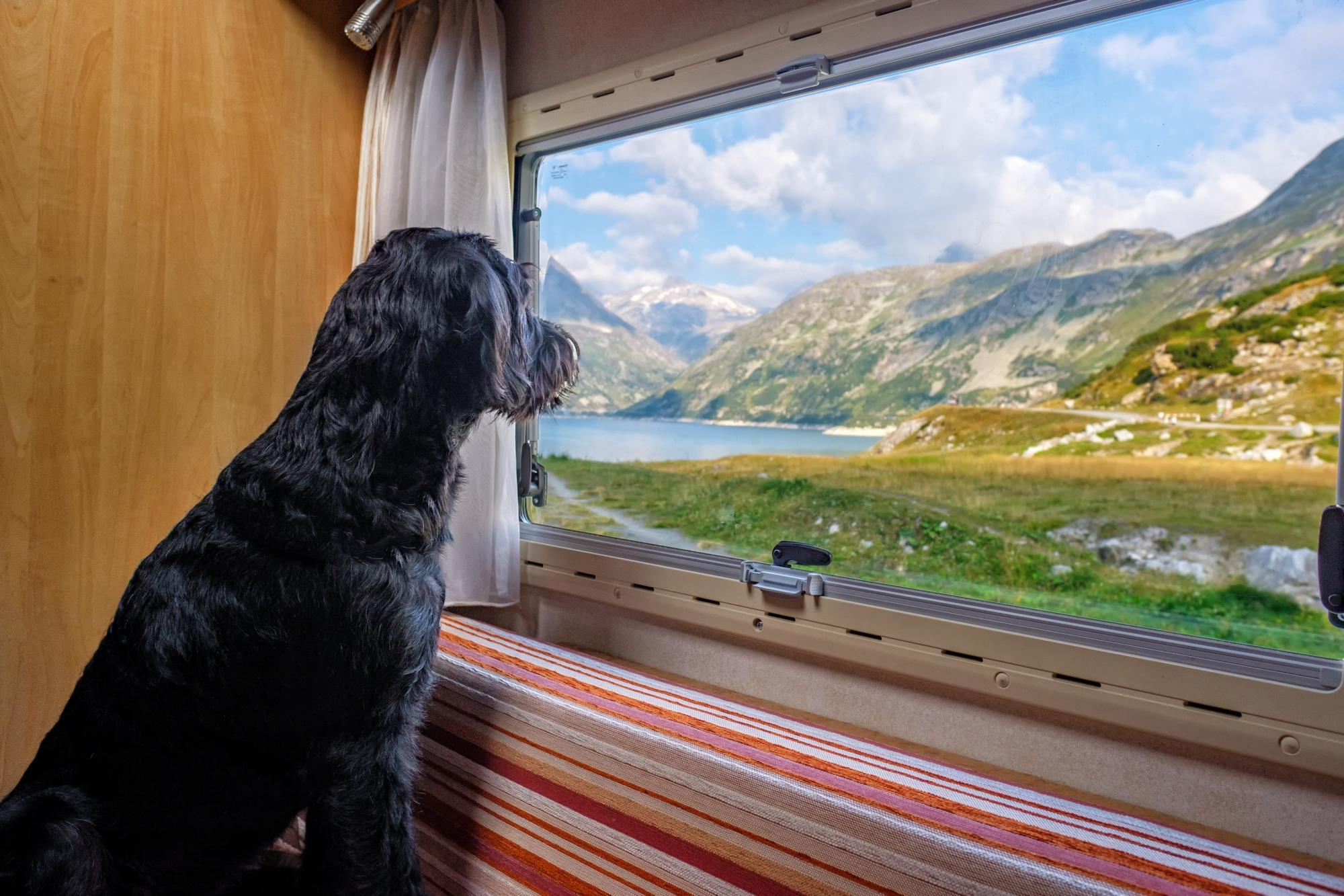 Dog-Friendly Campervan Hire | Dog-Friendly Motorhome Rental