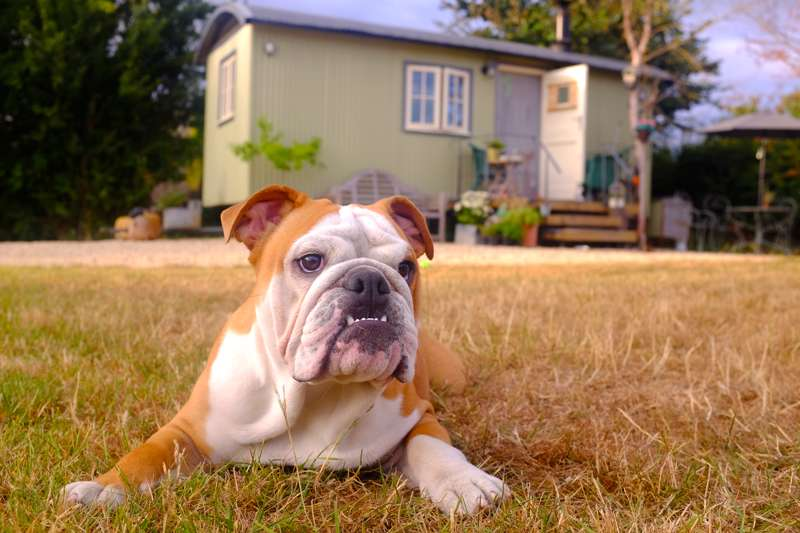 Dog friendly glamping – pet-friendly glamping stays