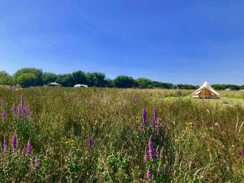 Little Haven Campsite Lower Foxhill, Walton West, Little Haven, Pembrokeshire SA62 3UA