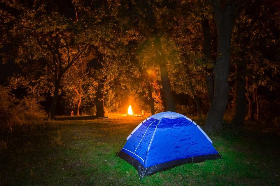 A beautiful, tents-only campsite situated at the bottom of a wooded valley in the South Downs National Park.