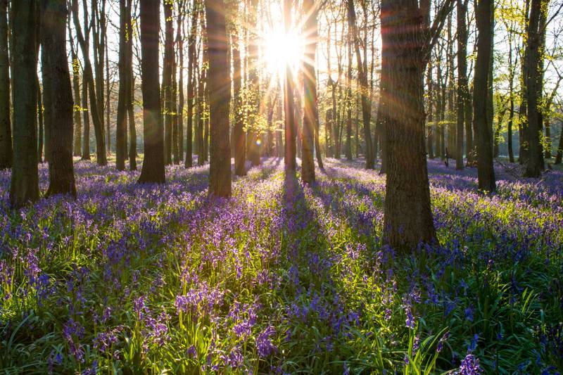 Woodland Camping: 7 Great Campsites for Bluebells