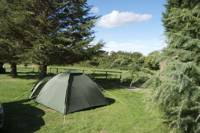 Extra Large Tent only Grass Pitch