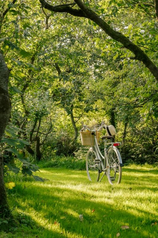 Woodland- Campervan Pitch