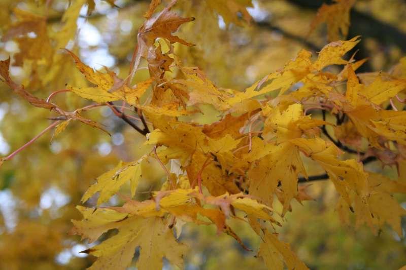 Scotland in the autumn