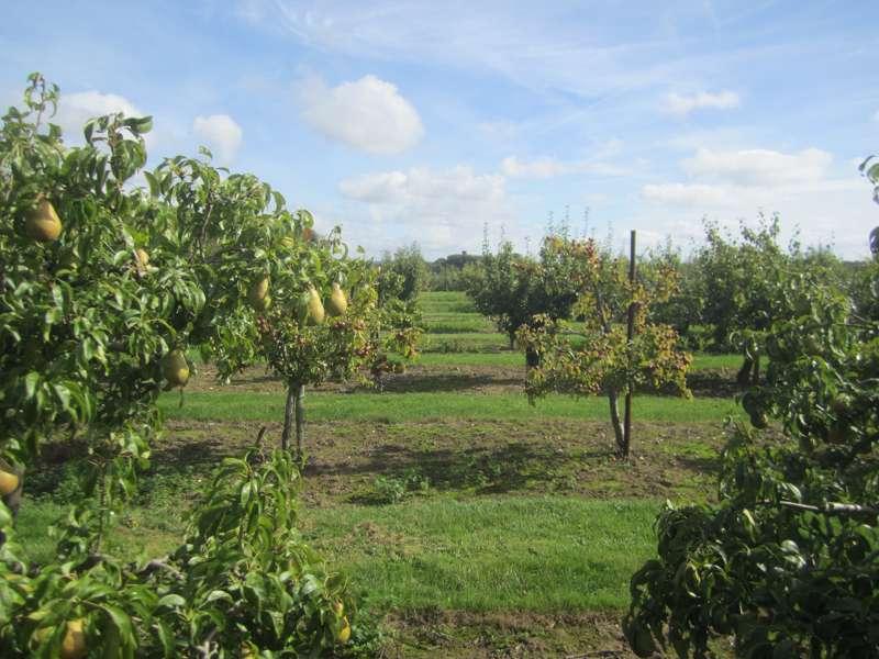 Brogdale National Fruit Collection
