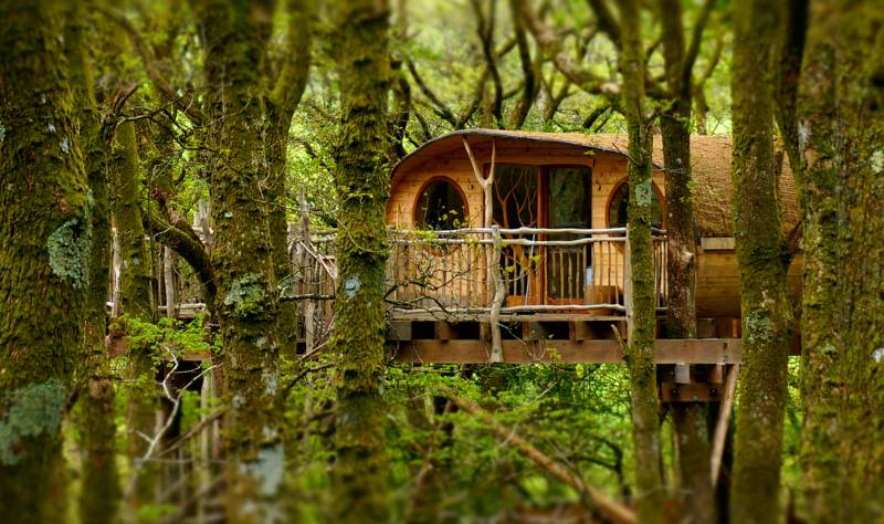 Lofty Treehouse