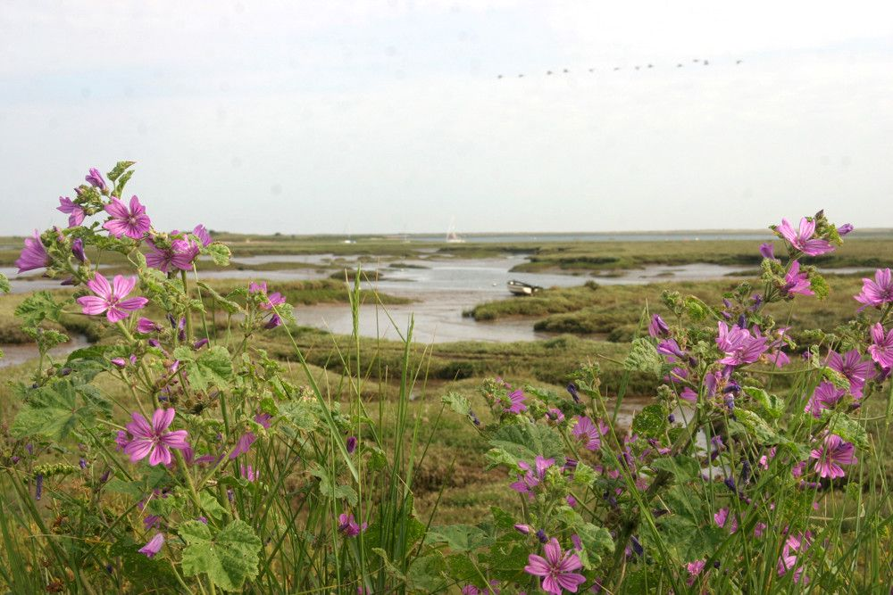 The Norfolk Coast Path at Brancaster Staithe
