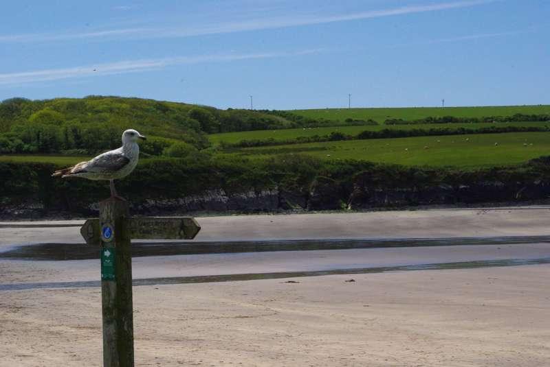 Newport Camping | Best campsites in Newport, Pembrokeshire