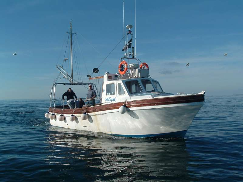 Fish Newquay