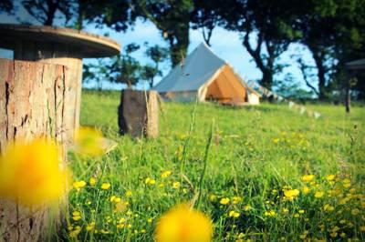 Green Oak Meadow