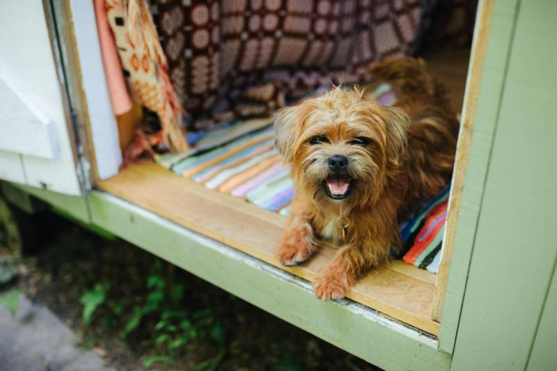 Dog-Friendly Glamping