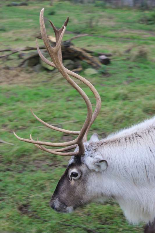 The Scottish Deer Centre