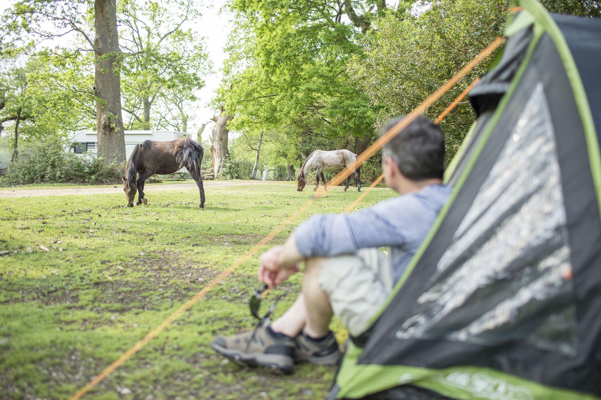 Ashurst Camping