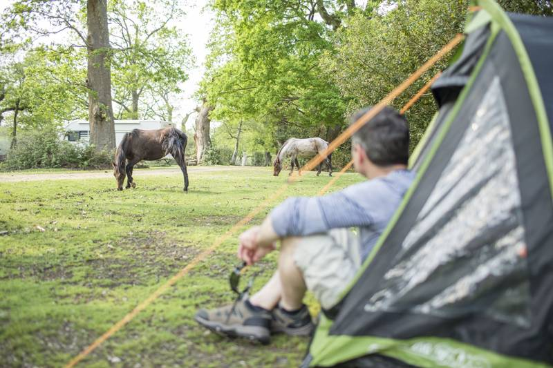 Southampton Camping | Best campsites in Southampton, Hampshire