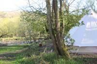 Primrose Woodland Pitch