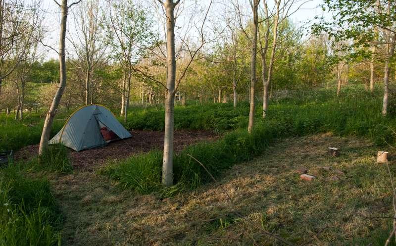 4.5m x 4.5m   Woodland pitch No. 10
