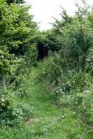 2.5m x 1.5m Very small woodland pitch No.5