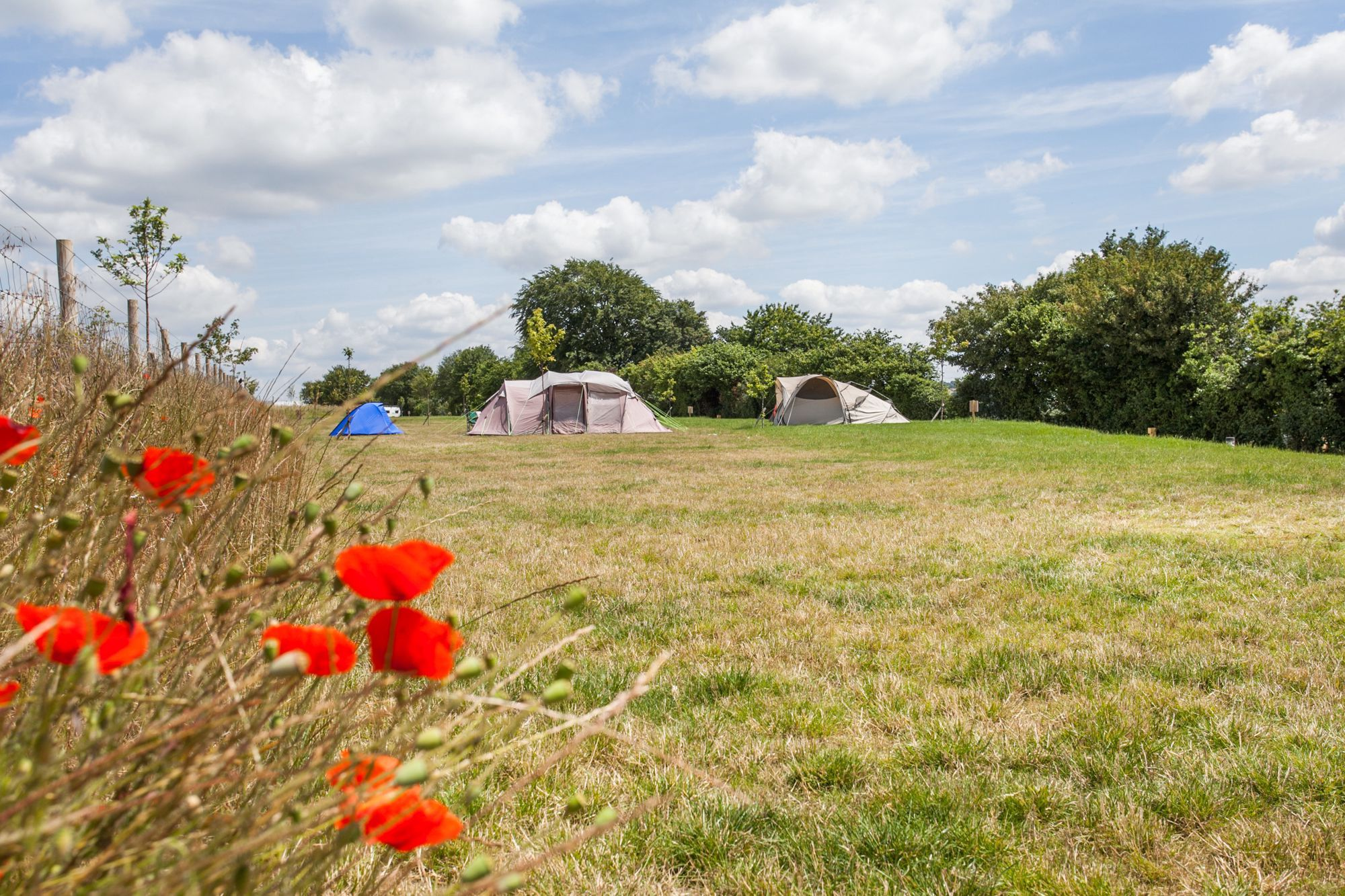Campsites in the South Downs