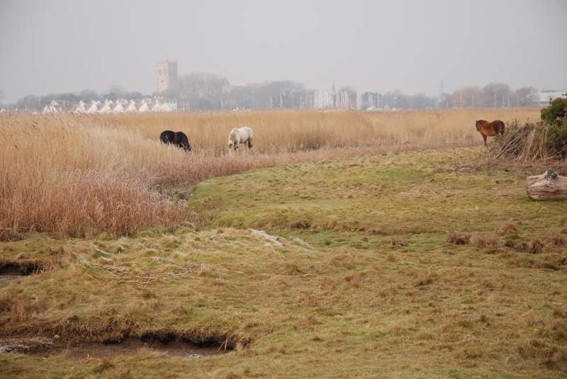 Stanpit Marshes