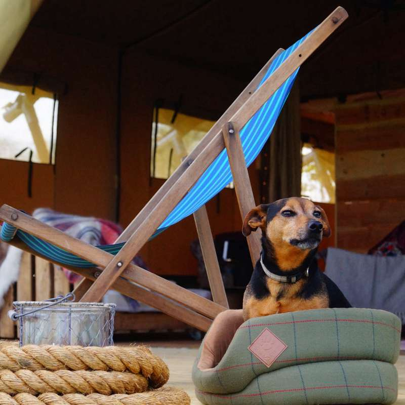 Glampers with Scampers: The Essential Guide to Glamping With Your Dog