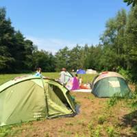 Woodland Meadow Pitch