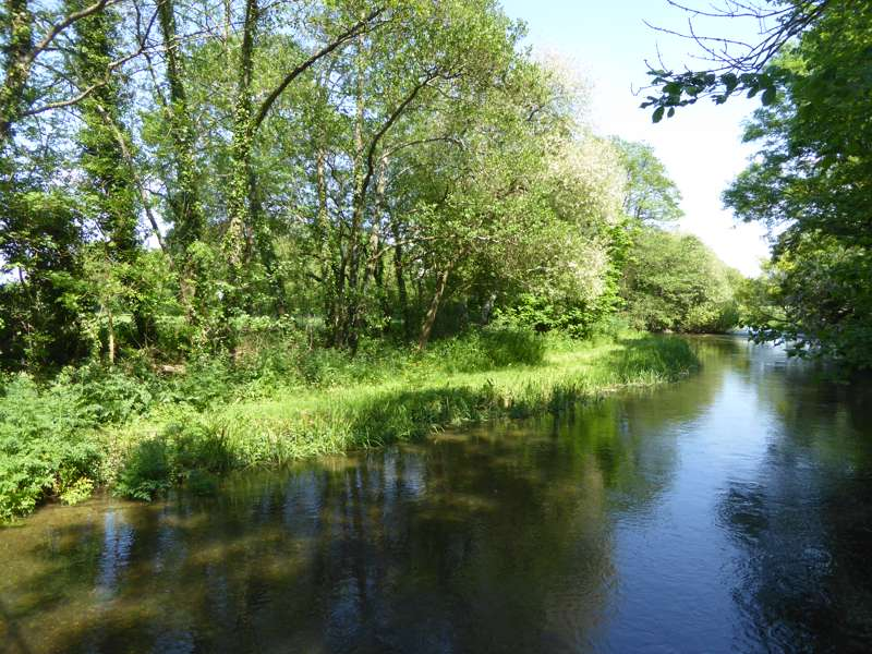 Enjoy some wild swimming in the adjacent River Frome, East Dorset.