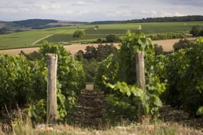 Champagne Perron-Beauvineau Route de Spoy, 10200 Meurville, Aube, France