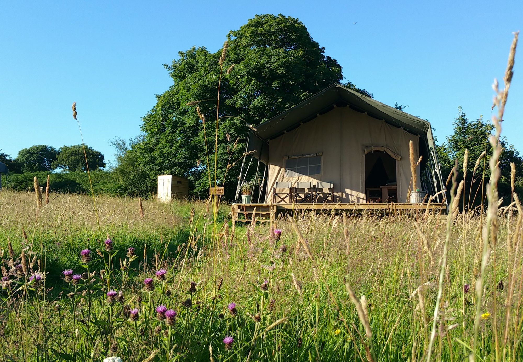 Care-free Welsh camping with acres of space, excellent walks and a beautiful woodland on the doorstep.