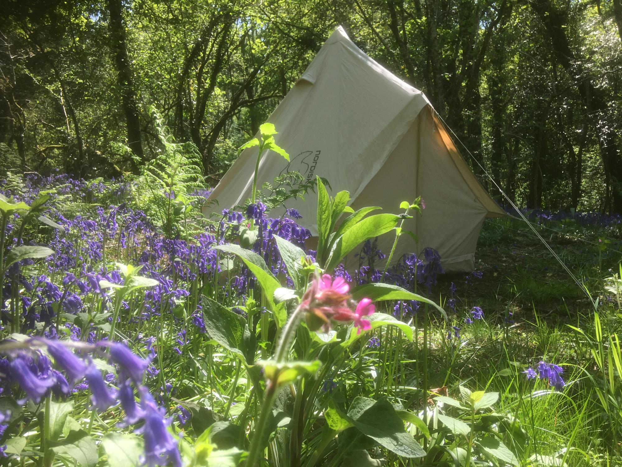 Campsites in The Greener Camping Club holidays at I Love This Campsite