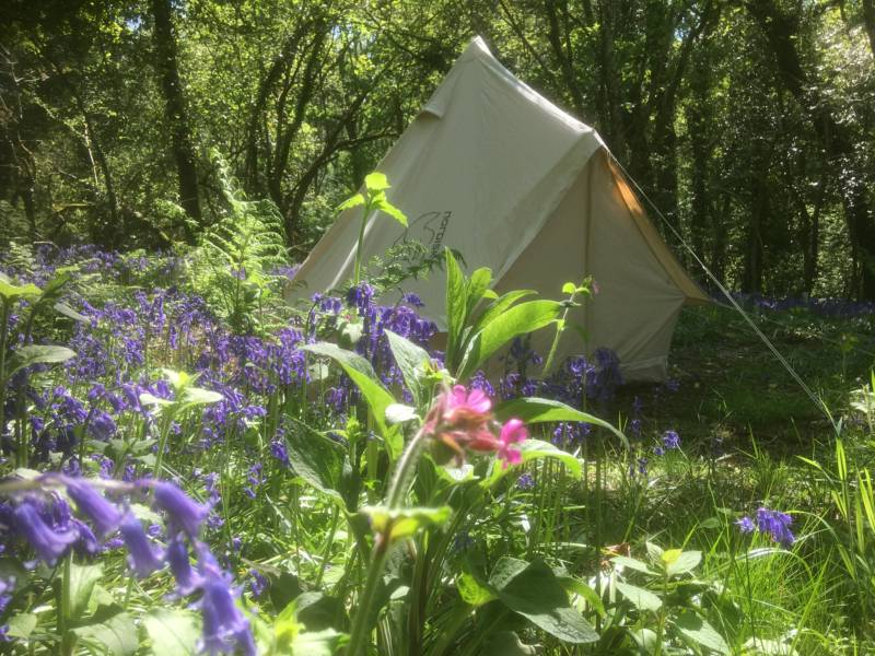 A tent pitch among the trees at Cilrath Wood Camping in Pembrokeshire.