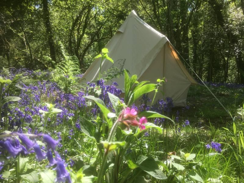 Cilrath Wood Camping Cilrath Fach Farm, Narberth, Pembrokeshire, SA67 7EY