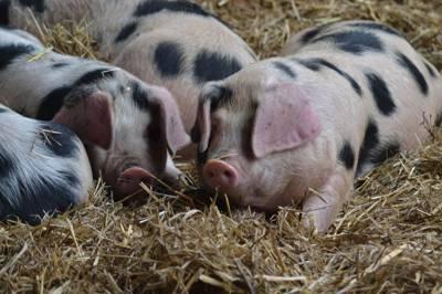 Stud Farm Telscombe Village Stud Farm, Telscombe Village, Lewes, East Sussex, BN7 3HZ