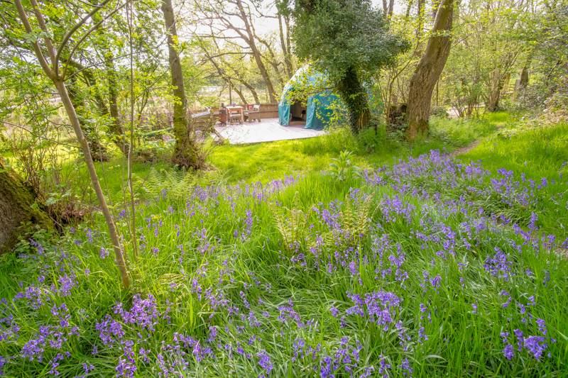 Willow – Stylish eco-friendly geo-domes with gorgeous Welsh woodland views