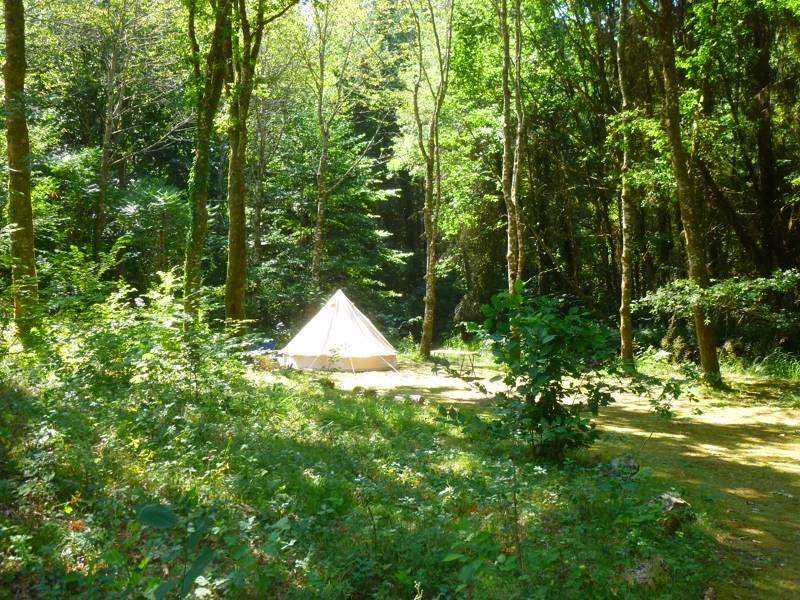 Woodland tent pitch