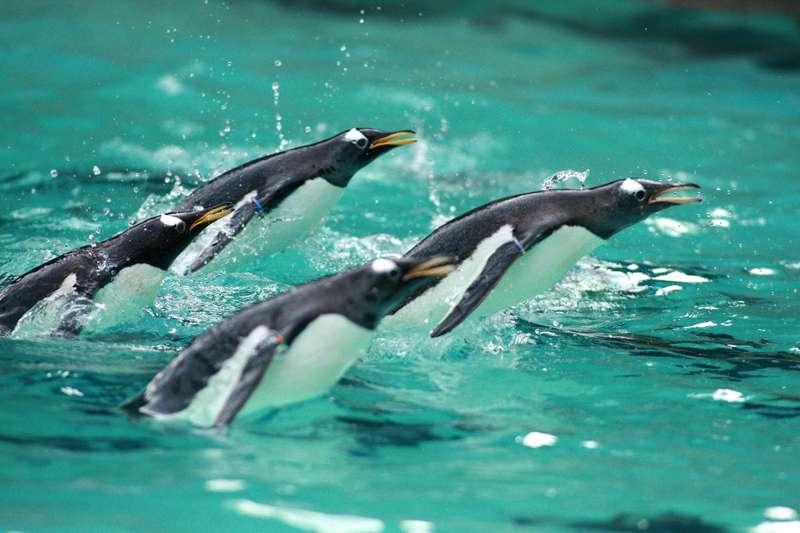 Belfast Zoo