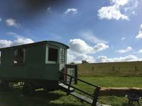 Rufus, The Shepherd's Hut