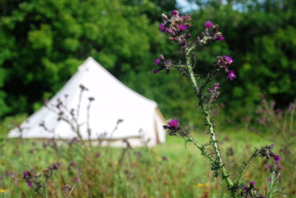 Bell tents in Cornwall