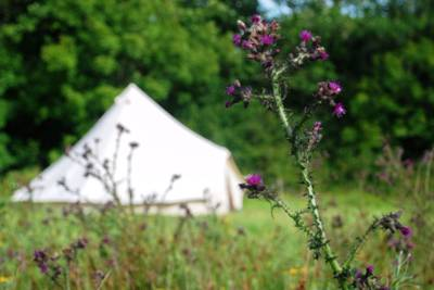 Bell tents in Cornwall – Best bell tent stays in Cornwall – Cool Camping