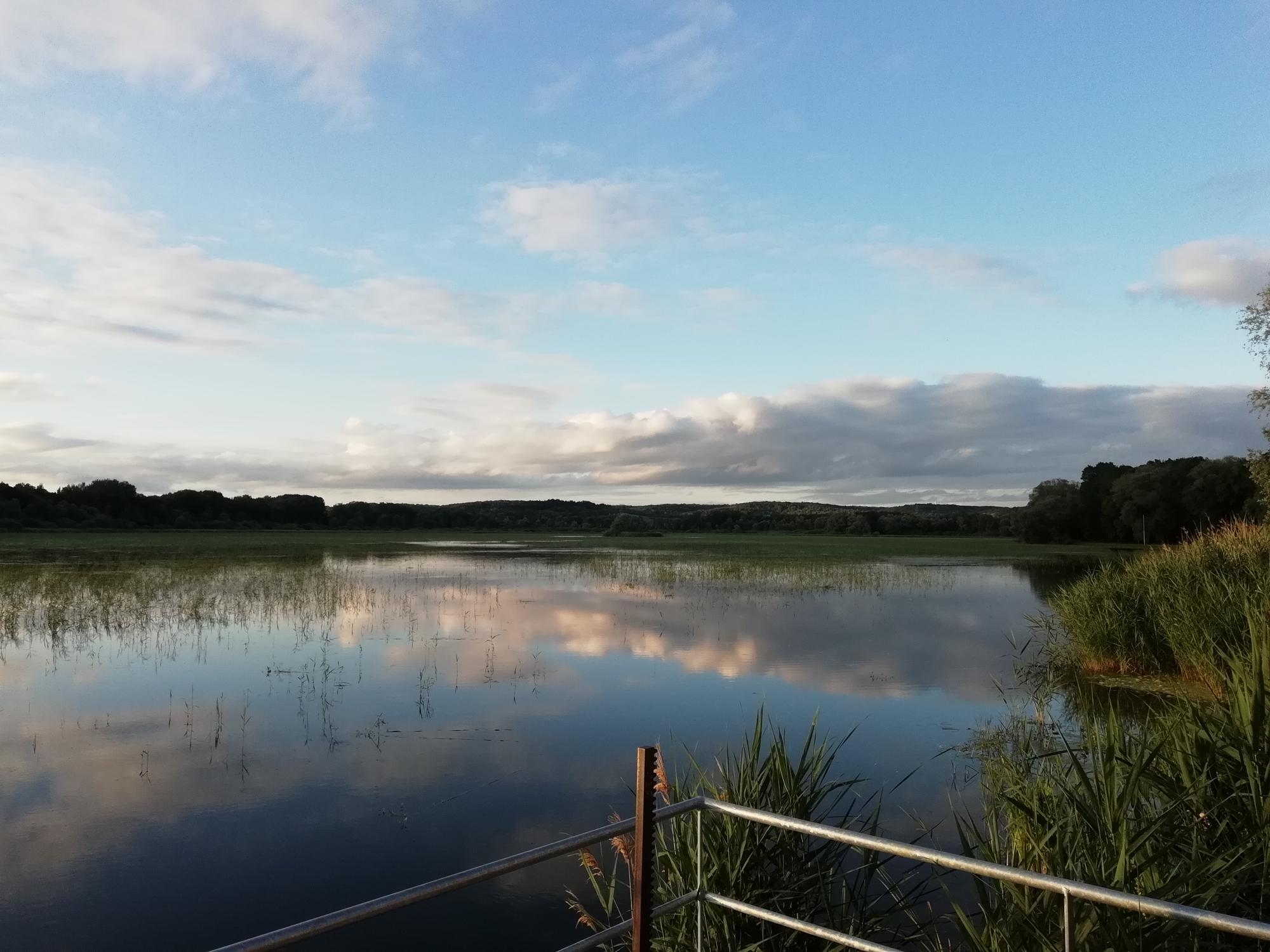 Les Grèbes du Lac de Marcenay