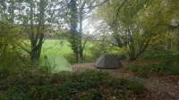 Woodland Tent Camping