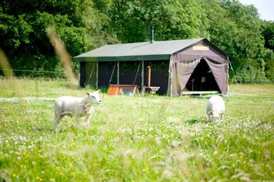 Special offer: £60 off early summer stays at Feather Down Farms