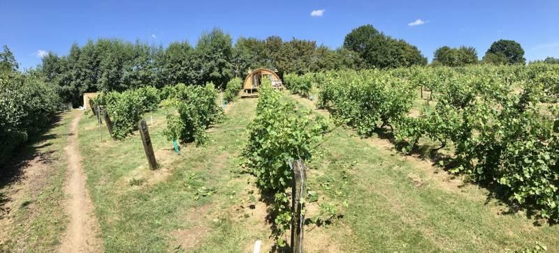 The Cabin-in-the-Vines at Valley Farm Vineyards Rumburgh Road, Wissett, Suffolk IP19 0JJ