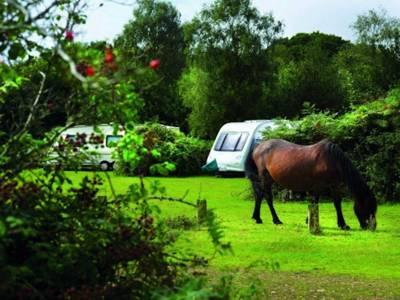 Ocknell Camping Ocknell Campsite, Fritham, Hampshire, SO43 7HH