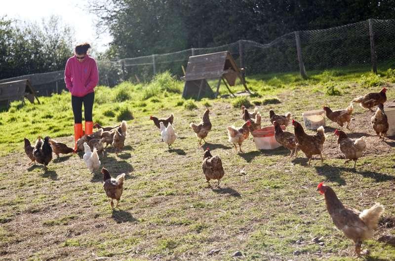 Billingsmoor Farm Billingsmoor Farm, Butterleigh, Cullompton, Devon EX15 1PQ