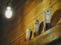 Owls Hollow