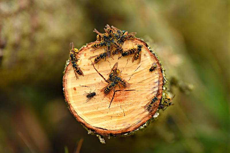 10 Top Tips on Avoiding Midges, Wasps & Insects While Camping