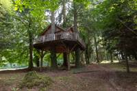 """""""Ours"""" Bear Family Tree House"""