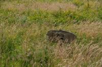 Grass pitch